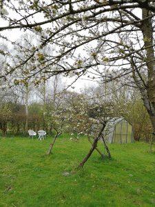 Boomgaard kas lente